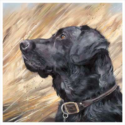 Black-Labrador-in-Reeds