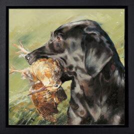 Black Labrador With Woodcoc