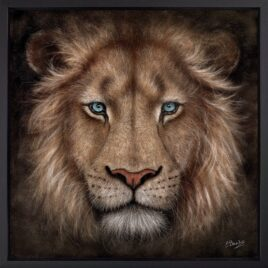 Soul Searching, lion, by Colin Banks