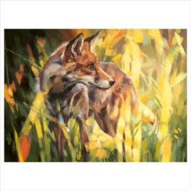 Fox In Dappled Sunlight by Debbie Boon