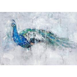 Peacock by Josie Appleby