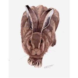 Leveret By Mary Ann Rogers X