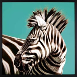 The Look Out, by Darryn Eggleton, Zebra