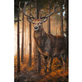 Forest Gaze Stag by Anthony Dobson